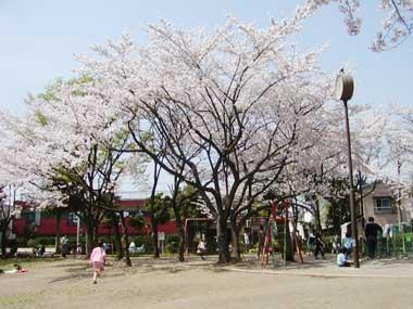 桜の名所情報。伊興公園の桜の名...